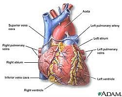 Heart cancer research paper