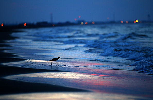 Gulf Coast (Photo by Win McNamee/Getty Images)